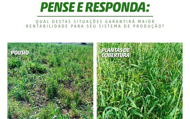 Conservar o solo: garantia de boa produtividade